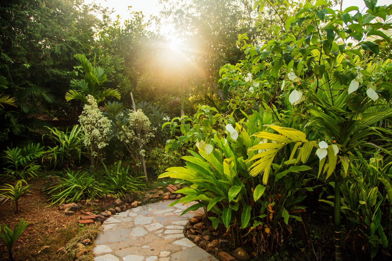 Summertime_tropical-gardens1