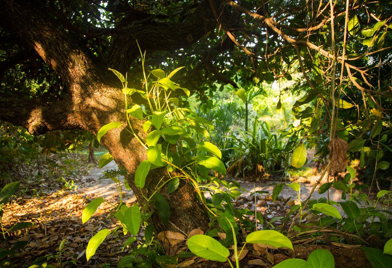 Summertime_tropical-gardens2
