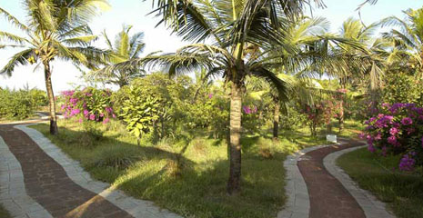 candolim-can54-villa-goa-017