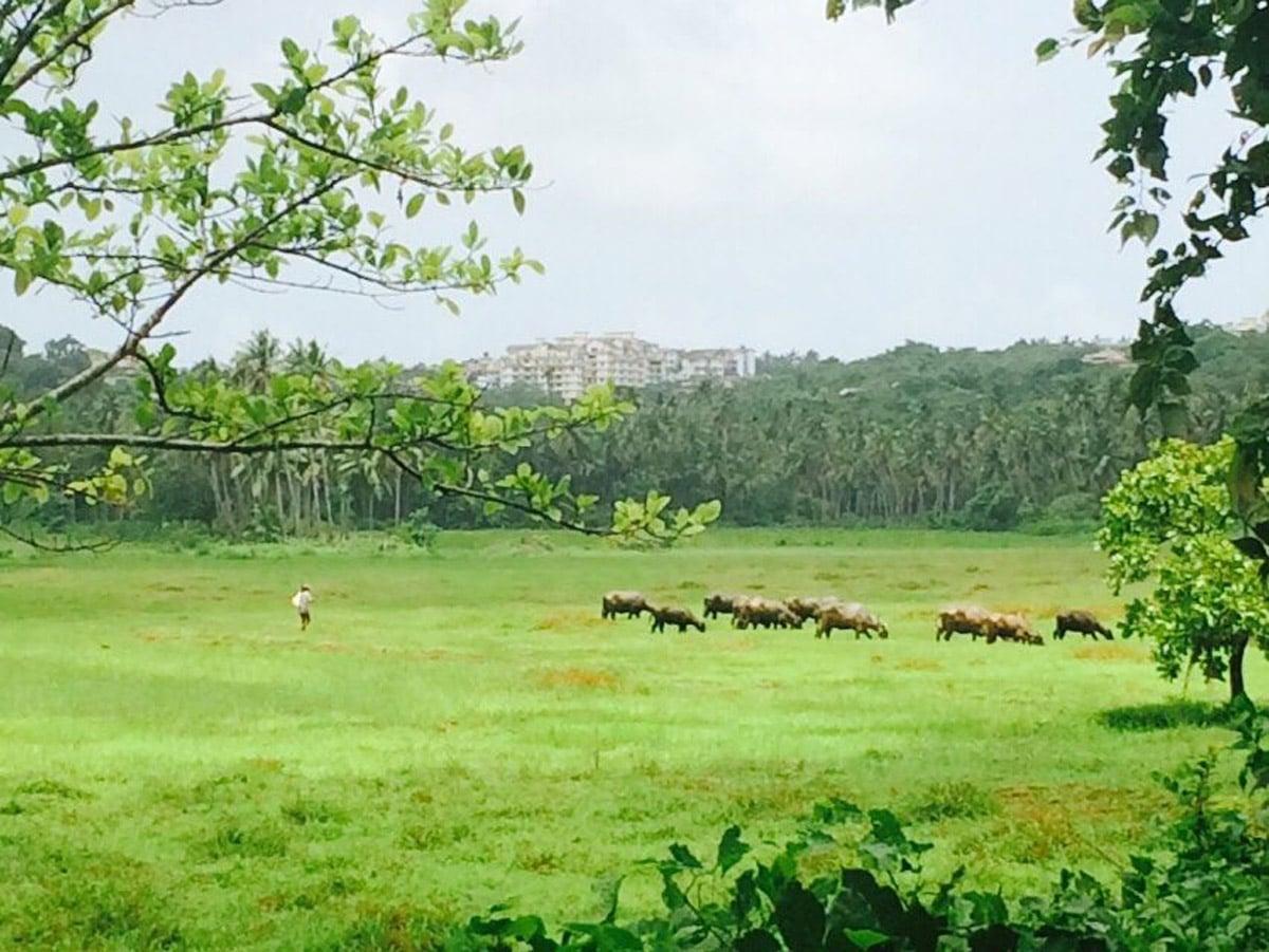 field-view