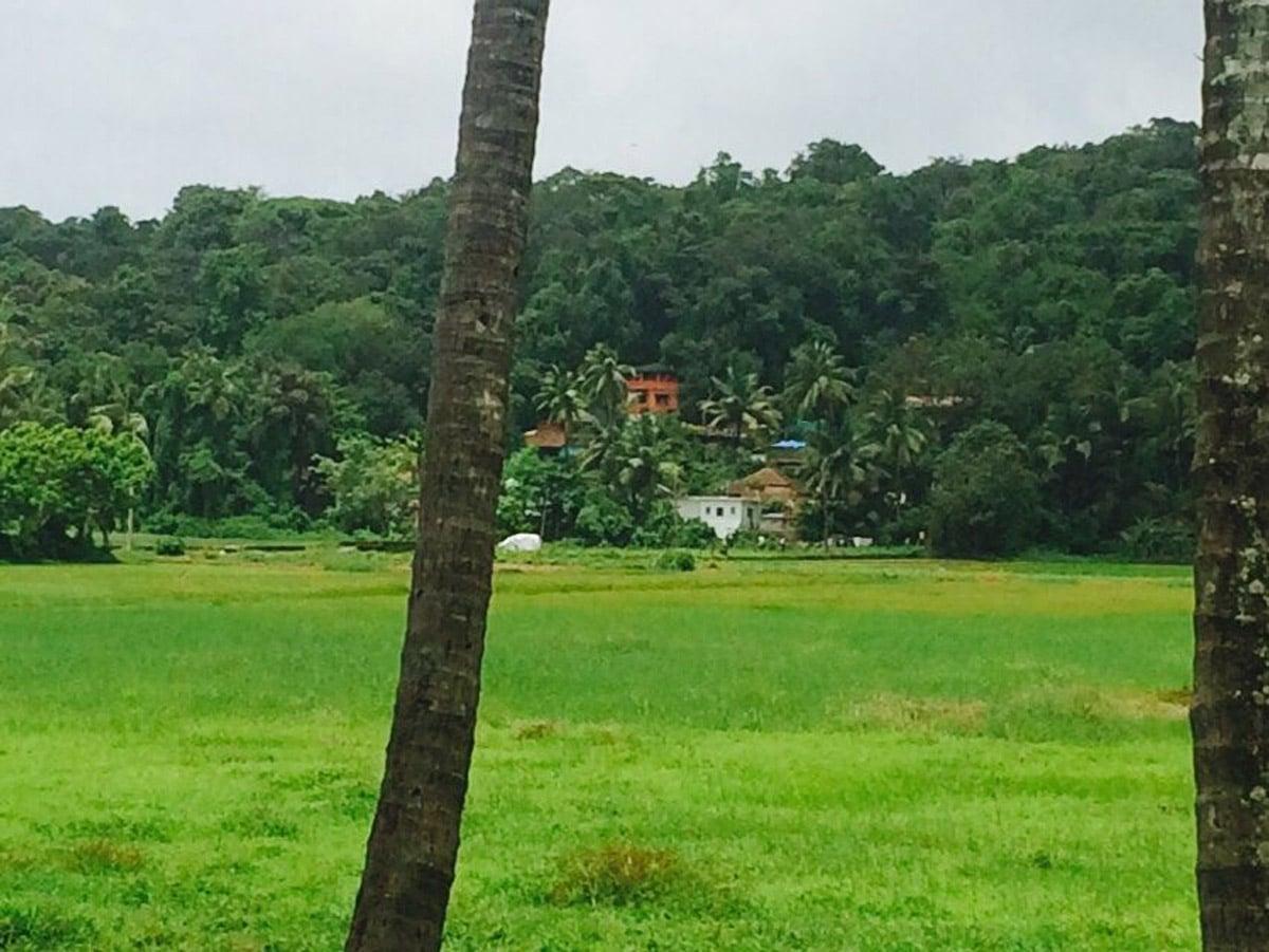 field-view2