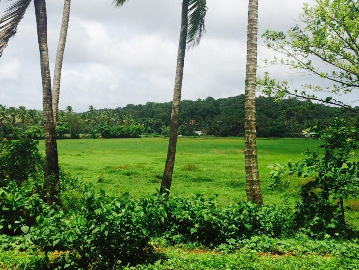 field-view3